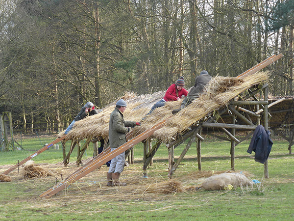 Thatching the lambing fold