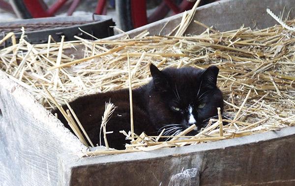 Farm_Cats_600px