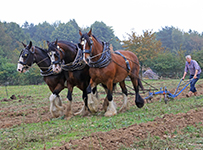 working-heavy-horse-show-203x150px