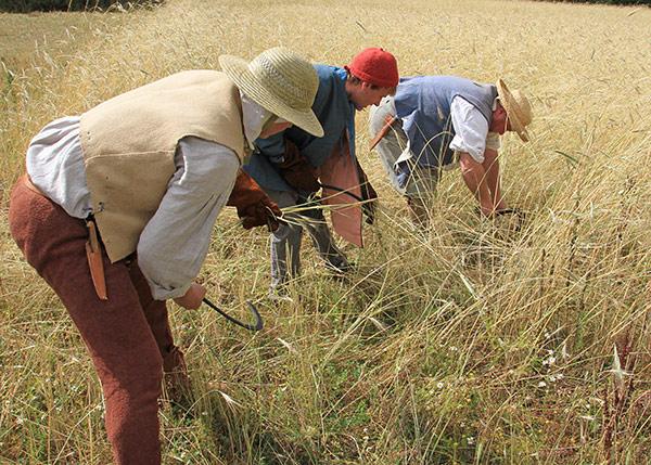 Living-history-Tudor-farming-600px