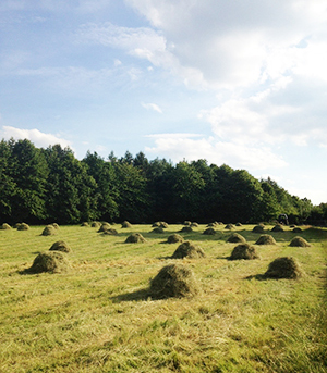 fields-of-hay-343px