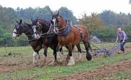 Working-Heavy-Horses-September-600x400px
