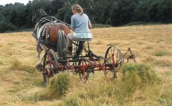 COAM-HLF-Rural-Heritage-Trainee-working-horse-drawn-hay-turner-600px