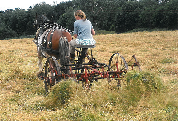 COAM-HLF-Rural-Heritage-Trainee-working-horse-drawn-hay-turner-600px