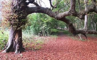 The woodland at COAM