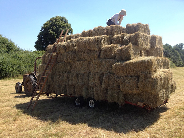 loading-bales-on-trailer_July16-1-600px