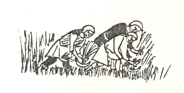 Medieval labourers reaping crop