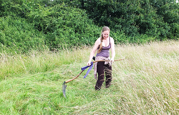 mowing rye crop using a scythe