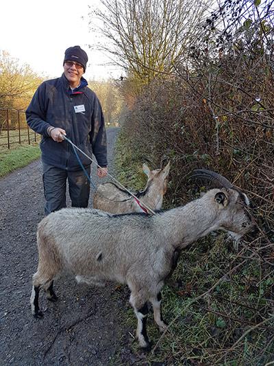 Goat Walking at COAM