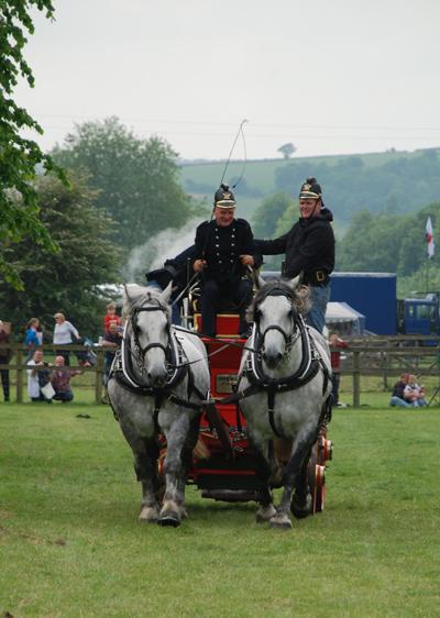 Working heavy horse show bucks
