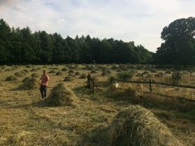Josh-hay-making-COAM