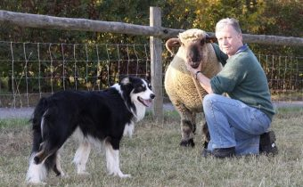 Sheepdog, Ted at Chiltern Open Air Museum